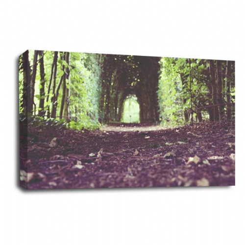 Forest Canvas Art Calm Wood Trees Wall Picture Print